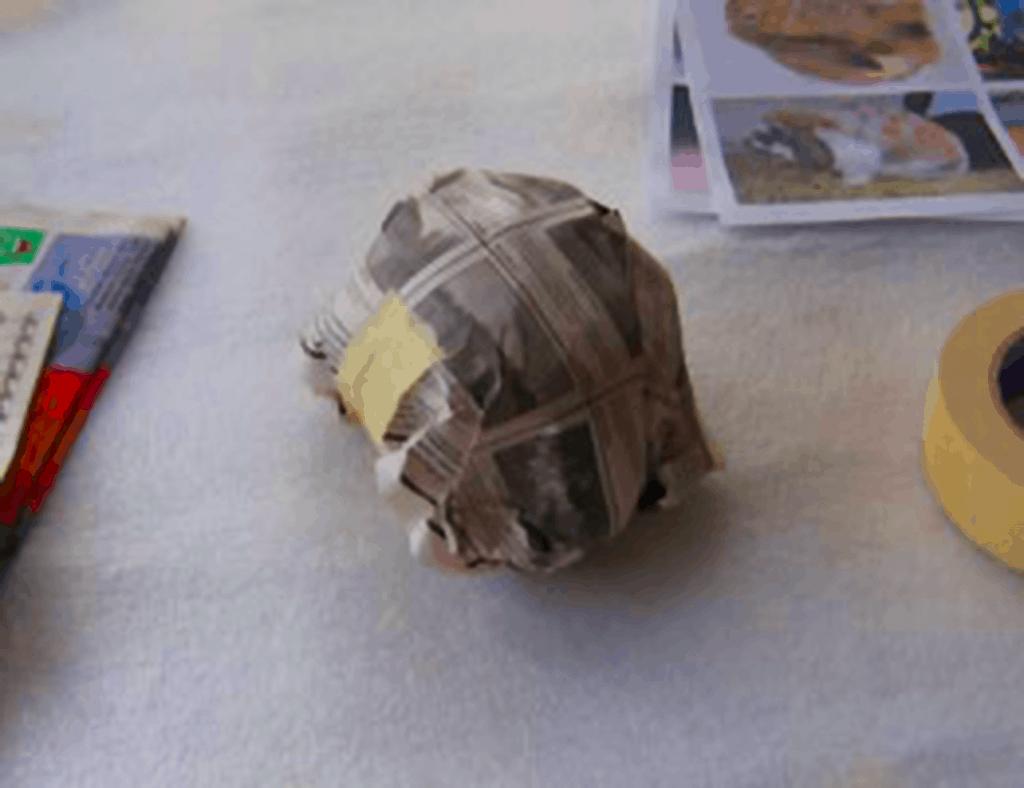 Paper Mache Lop-Eared Rabbit, Step 1