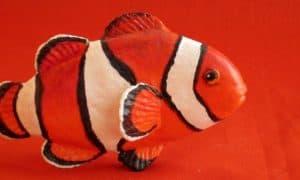 Paper Mache Clownfish