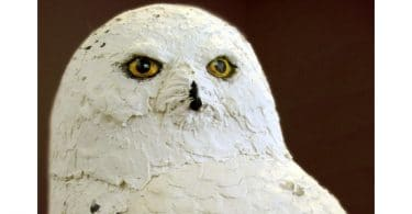 Snowy Owl made with paper mache clay