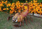 Scorpiumpkin