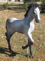 Paper Mache Foal Sculpture - Weatherproofed with Flow Coat