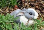Paper Mache Bunny, Outside