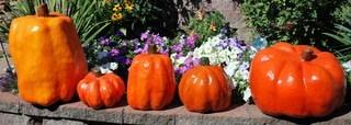 pumpkins-017