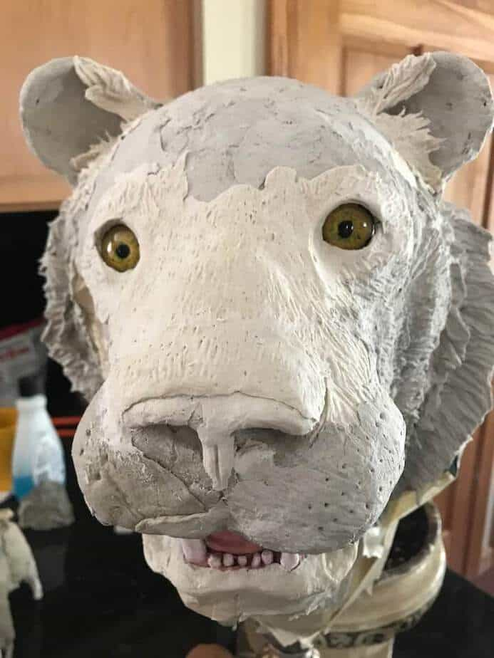 Tiger sculpture in process, with glass eyes.