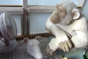 Greyhound Mask and Chimpanzee Bust, in Progress