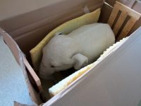 Elephant placed in box with thin foam padding.