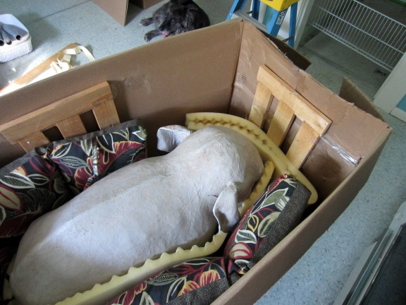 Moving An Elephant On The Cheap Ultimate Paper Mache