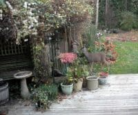 deer at birdfeeder2