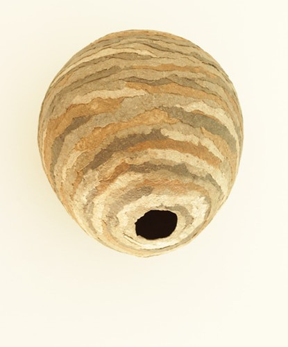 Paper Mache Wasp Nest - Guest Post