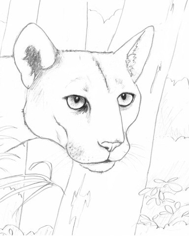 florida animals coloring pages - photo#10
