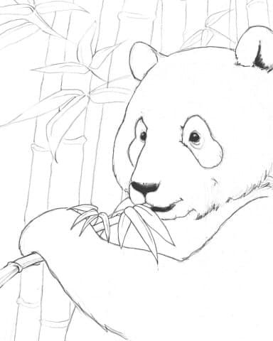 Giant Panda Coloring Page
