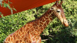 paper mache giraffe featured