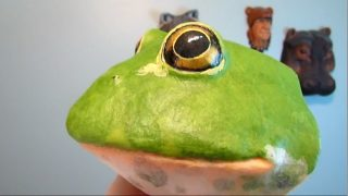 Giant African Bullfrog Trophy Head