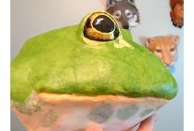 bullfrog tn