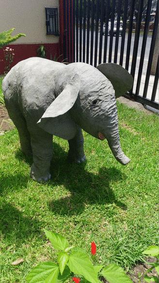 Your Baby Elephants