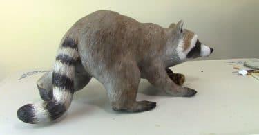 raccoon-final