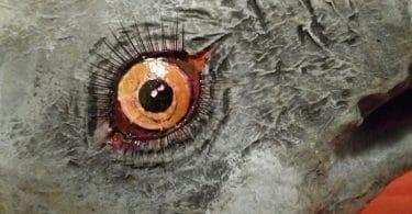 Paper Mache Elephant Eyes