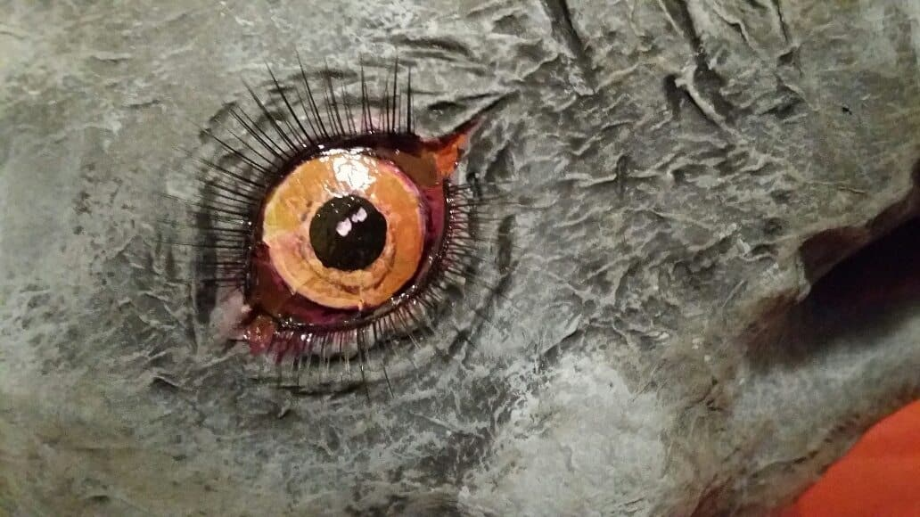 Elephant Eyes Painted