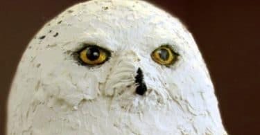 owl253