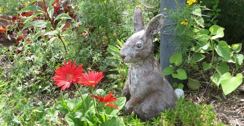 Pal Tiya Rabbit in the Garden