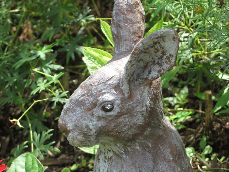 Close-Up photo of the rabbit's head.