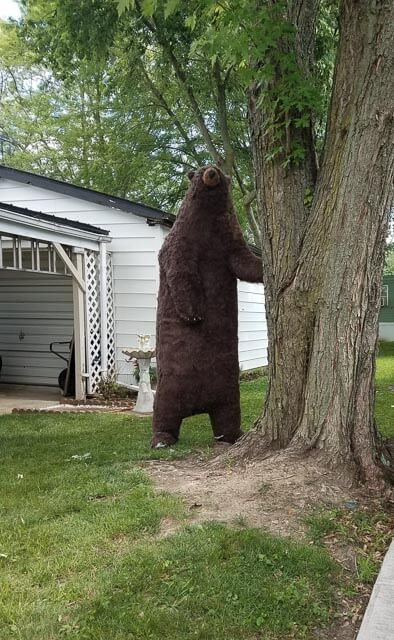 The finished life-sized bear standing outside