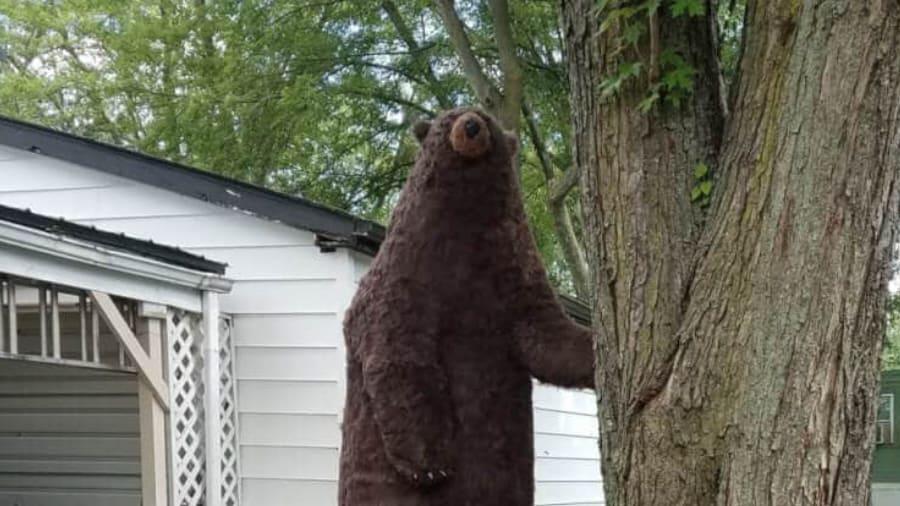 Waterproof paper mache bear sculpture