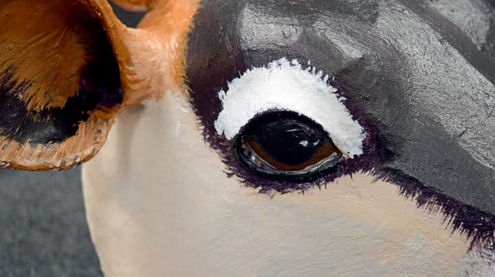 Painting the eye on the Jersey Cow.