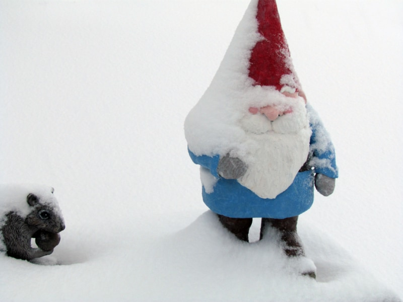 Gnome in the snow