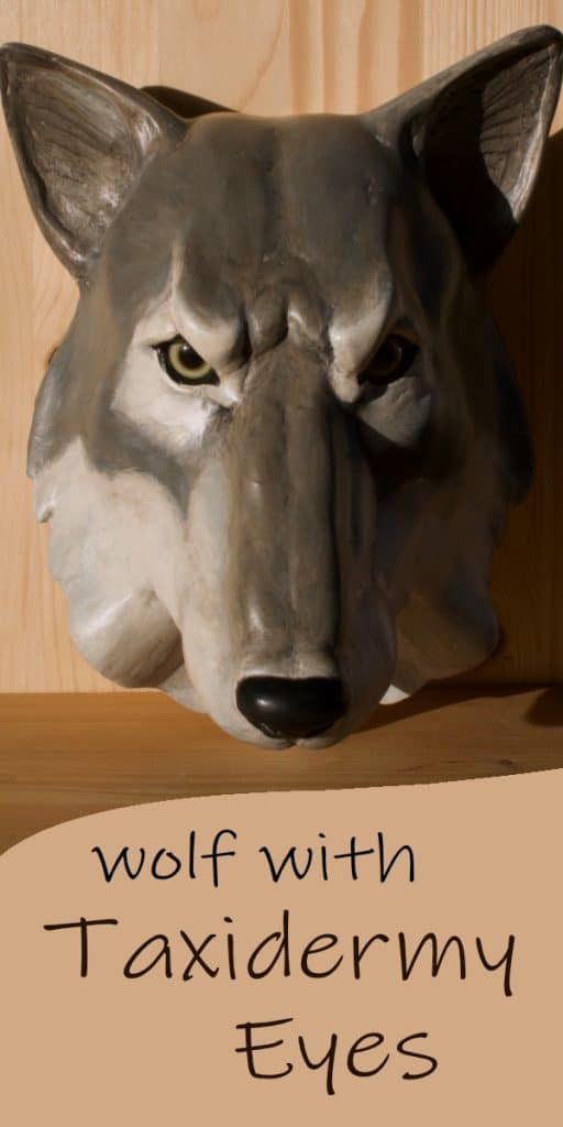 Wolf Sculpture With Taxidermy Eyes