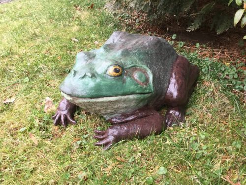 Pal Tiya Bullfrog in the Garden