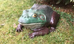Pal Tiya Bullfrog in the Garden