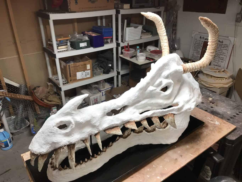 dinosaur skull2