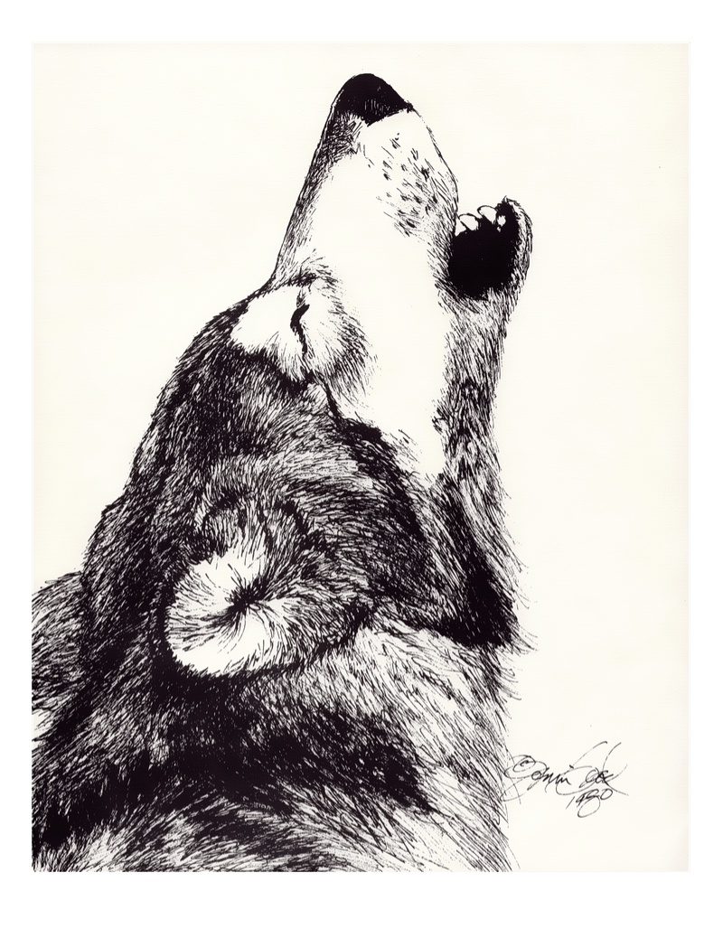 Free Printable Howling Wolf Drawing by Jonni Good