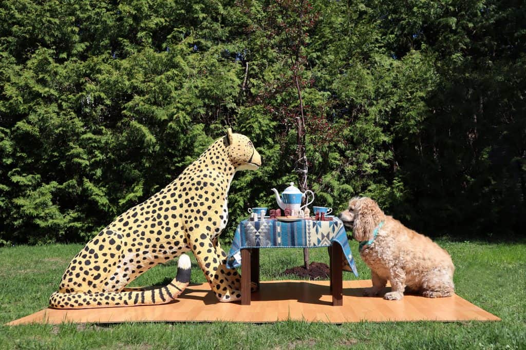Cheetah-Installation