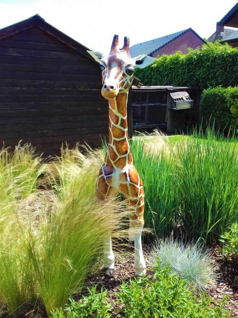 Giraffe Front