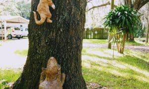 Dog chasing cat papercrete sculpture