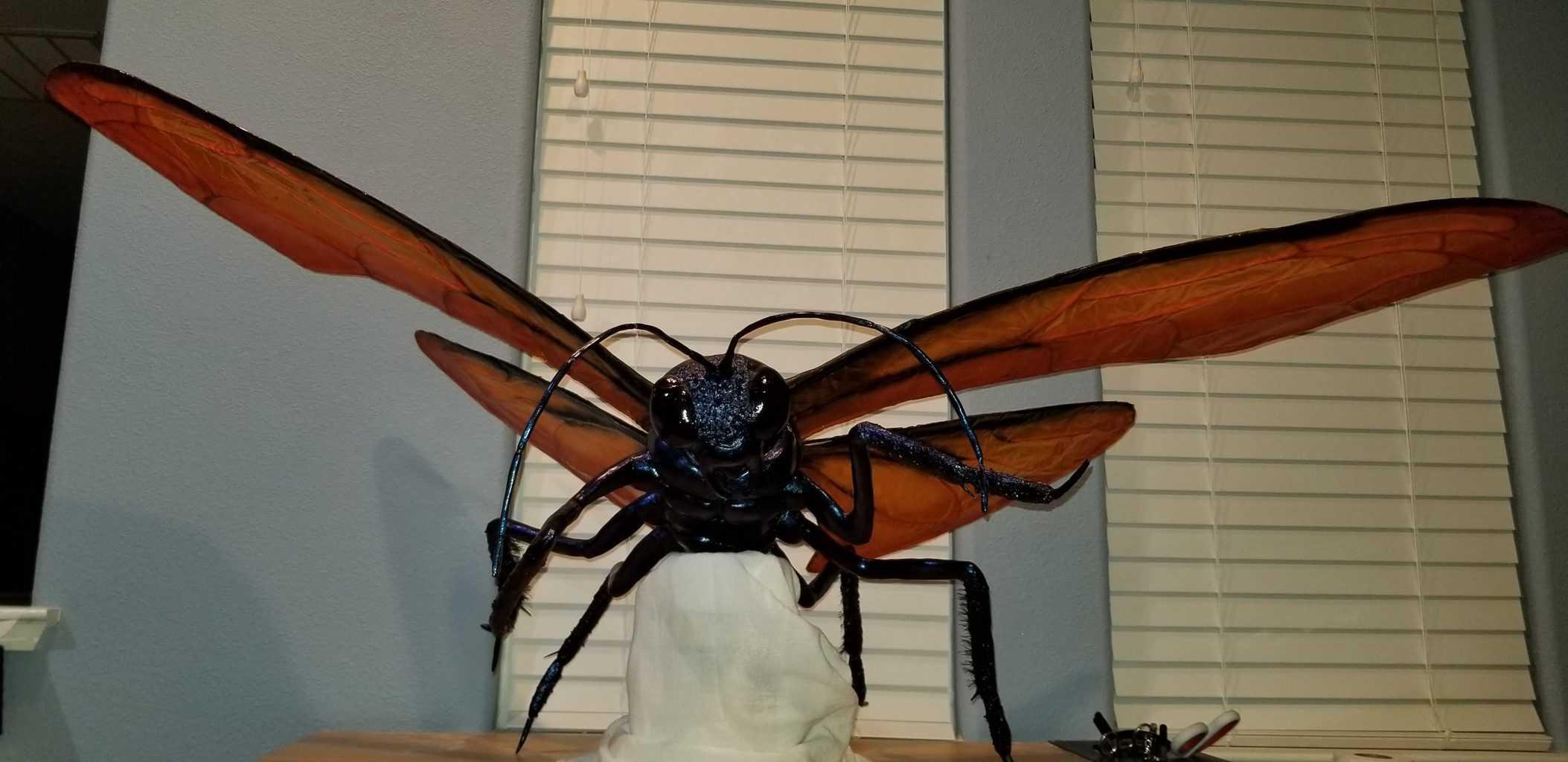 Tarantula hawk made with paper mache clay
