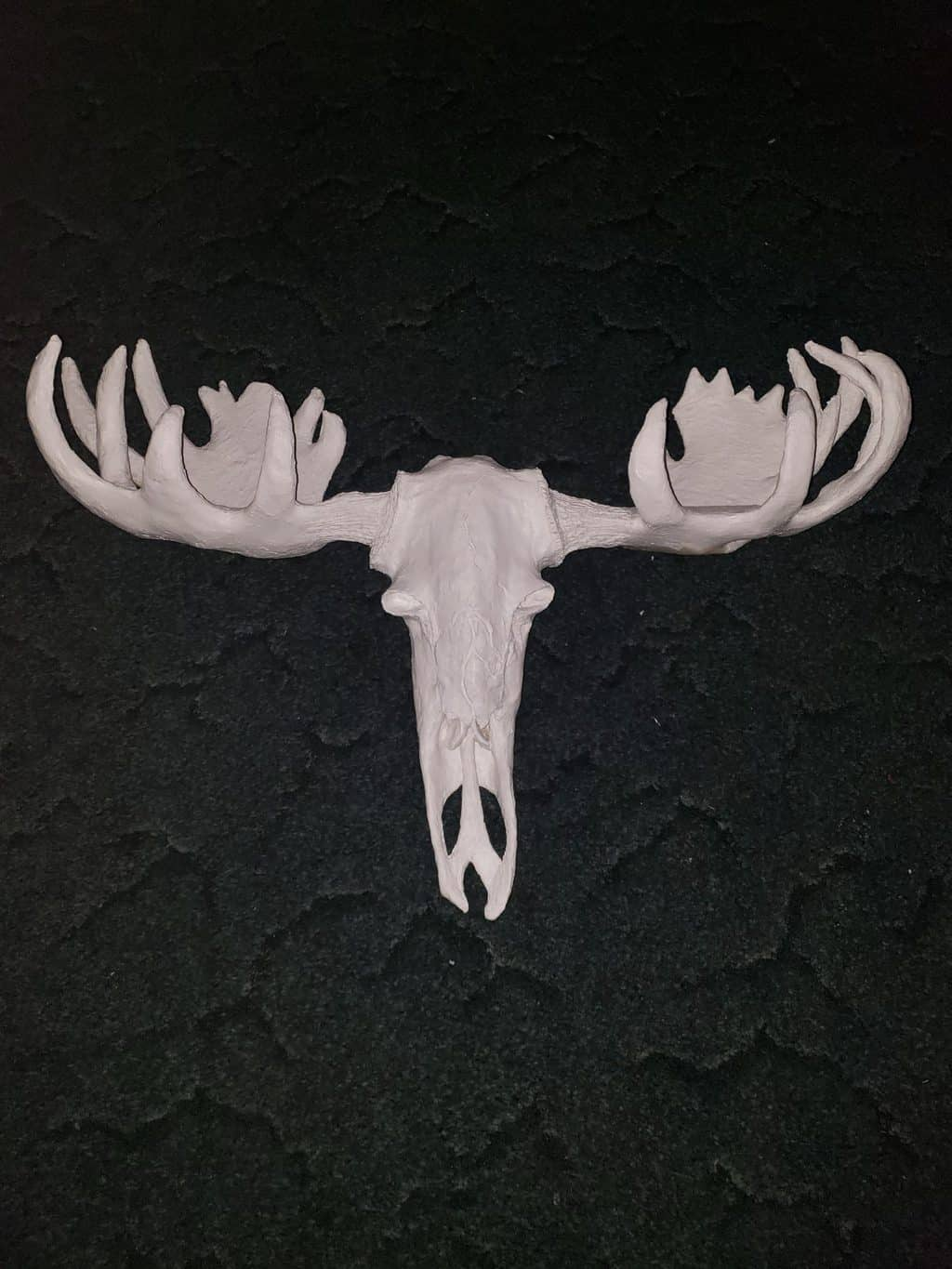 Moose skull made with paper mache clay