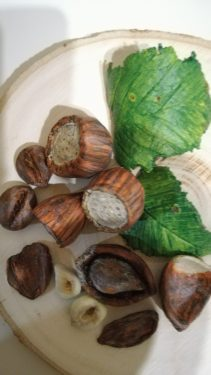 Hazelnuts made with paper mache clay