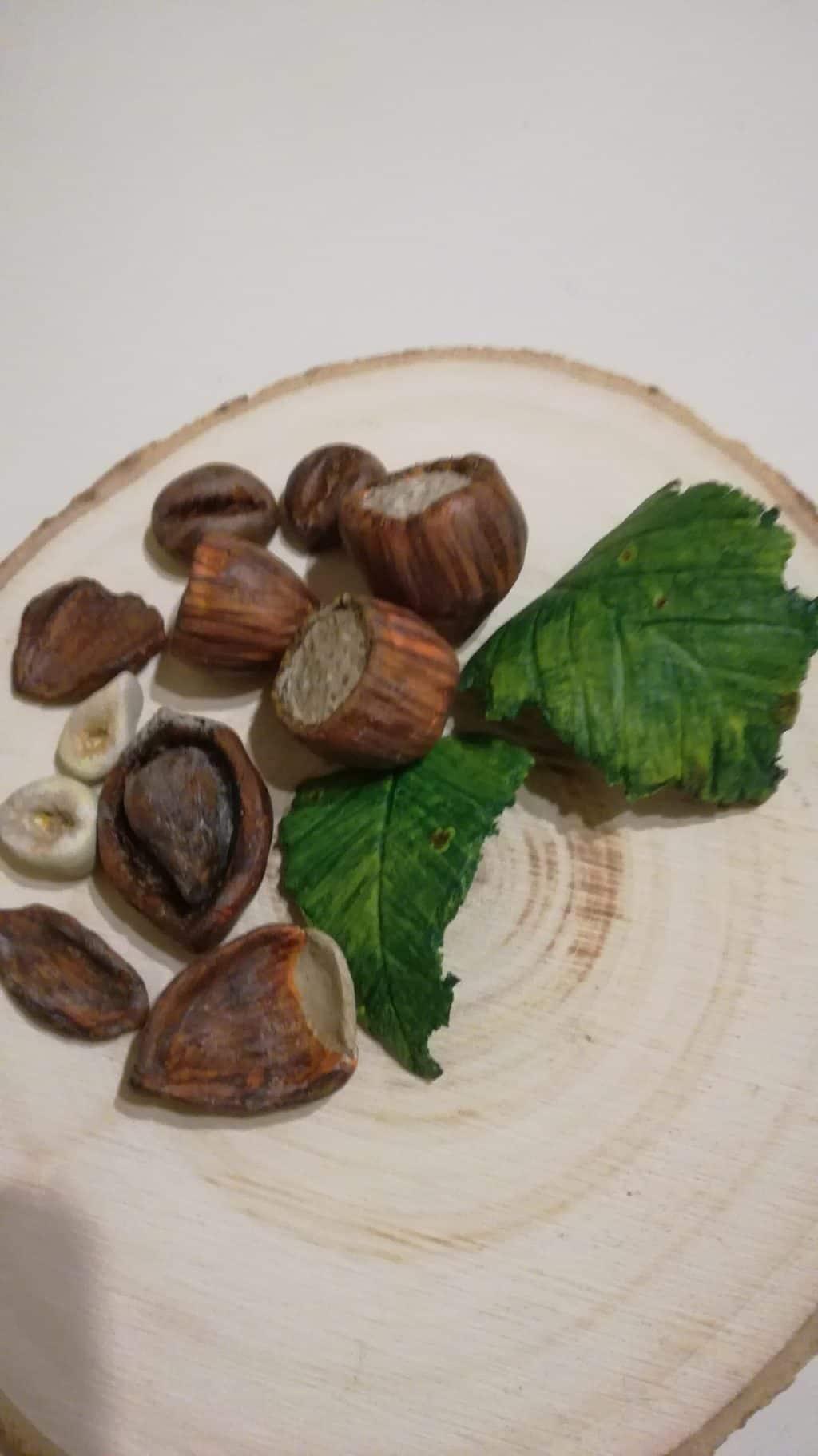 Paper clay hazelnuts