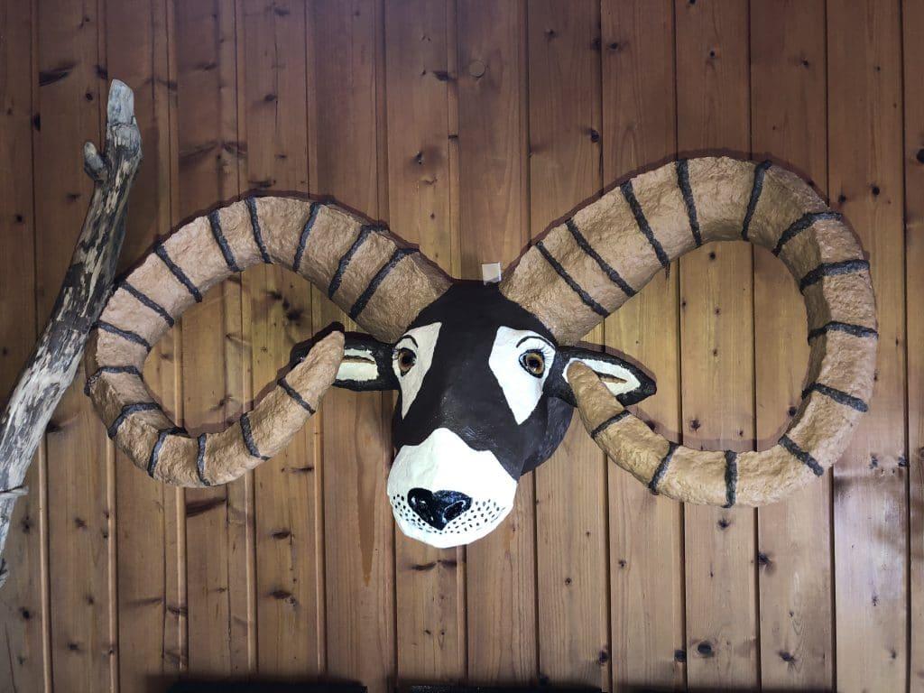 Paper mache moufflon faux trophy mount