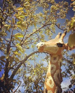 Paper mache giraffe by Linda Hameeteman