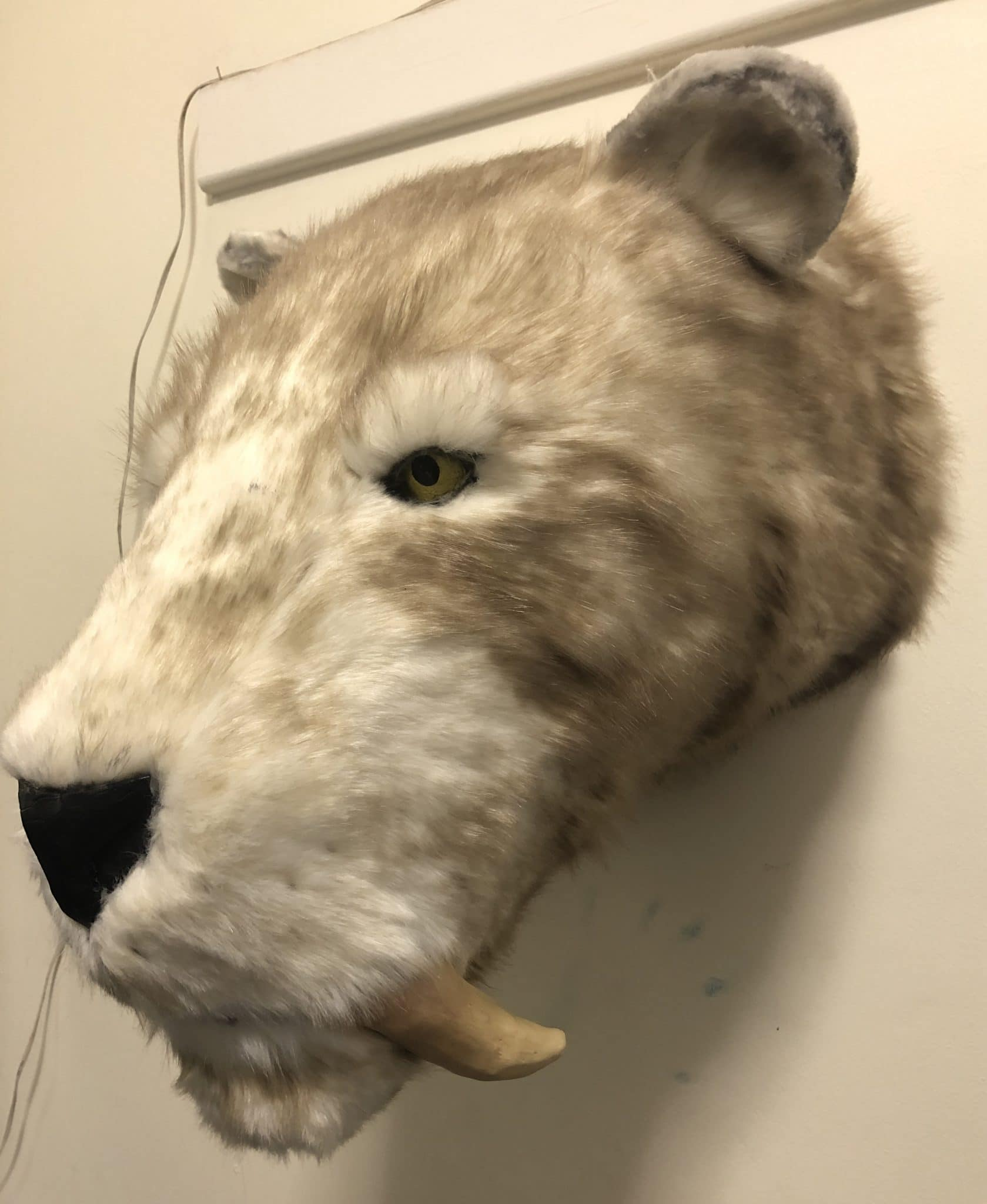 Sabertooth head